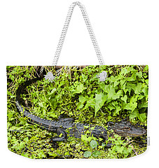 Baby Alligator Weekender Tote Bag by Marilyn Hunt