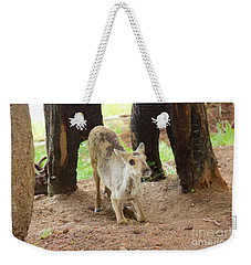 Baby Caribou Rising Weekender Tote Bag by Sean Griffin