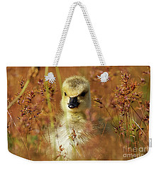Baby Cuteness - Young Canada Goose Weekender Tote Bag