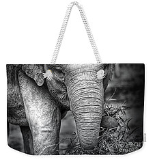 Baby Elephant 1 Weekender Tote Bag by Charuhas Images