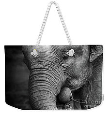 Baby Elephant Close Up Weekender Tote Bag by Charuhas Images