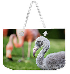Baby Flamingo With Mom In Background Weekender Tote Bag by Stephanie Hayes