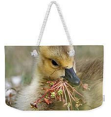 Baby Gosling Collecting Flowers Weekender Tote Bag