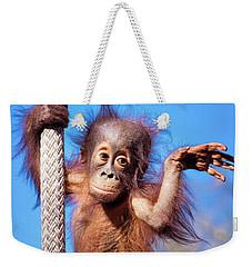 Baby Orangutan Climbing Weekender Tote Bag by Stephanie Hayes