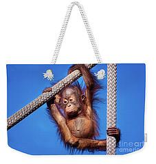 Baby Orangutan Hanging Out Weekender Tote Bag by Stephanie Hayes