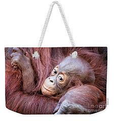 Baby Orangutan Weekender Tote Bag