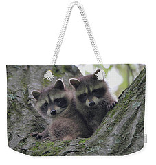 Baby Raccoons In A Tree Weekender Tote Bag by Dan Sproul