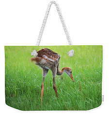 Weekender Tote Bag featuring the photograph Baby Sandhill Summer by Barbara Chichester