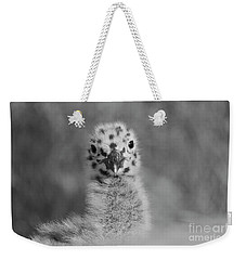 Weekender Tote Bag featuring the photograph  Baby Seagull Spots    by John F Tsumas
