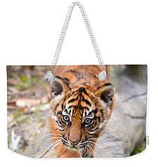 Baby Sumatran Tiger Cub Weekender Tote Bag by Richard Bryce and Family