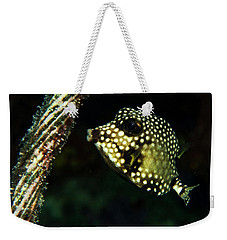 Weekender Tote Bag featuring the photograph Baby Trunk Fish by Jean Noren