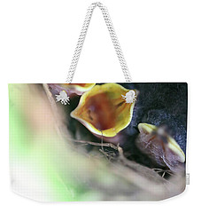Weekender Tote Bag featuring the photograph Baby Wrens In The Flowers 338 by Ericamaxine Price