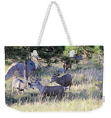 Weekender Tote Bag featuring the photograph Bachelor Pad by Shane Bechler