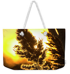 Weekender Tote Bag featuring the photograph Backlit By The Sunset by Zawhaus Photography