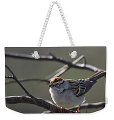 Weekender Tote Bag featuring the photograph Backlit Chipping Sparrow by Susan Capuano