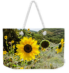 Backlit Sunflower Aka Helianthus Weekender Tote Bag by Sue Smith