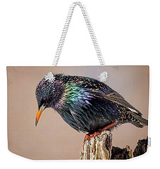 Backyard Birds European Starling Square Weekender Tote Bag