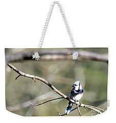 Backyard Blue Jay Weekender Tote Bag
