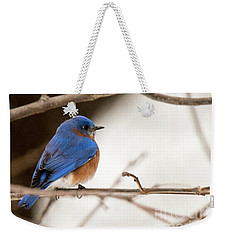 Backyard Bluebird Weekender Tote Bag