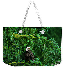 Weekender Tote Bag featuring the photograph Bald Eagle In Temperate Rainforest Alaska Endangered Species by Dave Welling