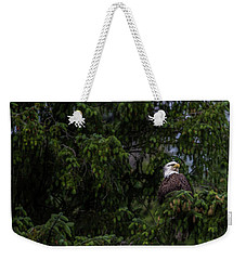 Bald Eagle In The Tree Weekender Tote Bag by Timothy Latta