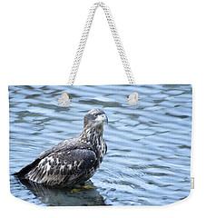 Bald Eagle Juvenile Weekender Tote Bag