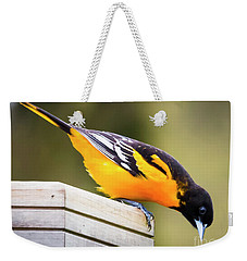 Weekender Tote Bag featuring the photograph Baltimore Oriole About To Jump by Ricky L Jones