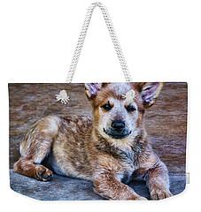 Bandit  Weekender Tote Bag