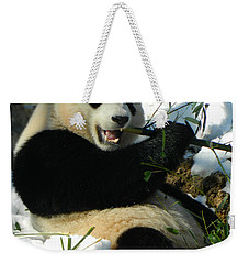 Bao Bao Sittin' In The Snow Taking A Bite Out Of Bamboo2 Weekender Tote Bag
