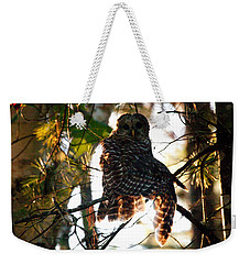 Barred Owl At Sunrise Weekender Tote Bag