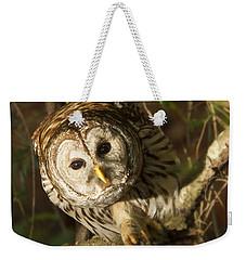 Barred Owl Peering Weekender Tote Bag