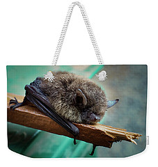 Weekender Tote Bag featuring the photograph Bat Rehoused by Jean Noren