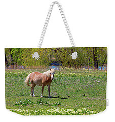 Beautiful Blond Horse And Four Little Birdies Weekender Tote Bag by James BO Insogna