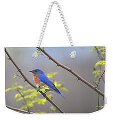 Beautiful Eastern Bluebird Weekender Tote Bag