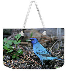 Beautiful Indigo Bunting Weekender Tote Bag by Sabrina L Ryan