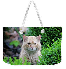 Weekender Tote Bag featuring the photograph Beautiful Kitty by Trina Ansel