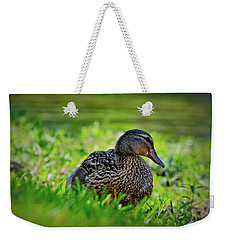 Weekender Tote Bag featuring the photograph Beautiful Mama Duck by Linda Unger