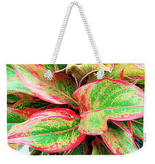 Weekender Tote Bag featuring the photograph Beautiful Red Aglaonema by Ray Shrewsberry