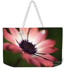 Beautiful Rich African Daisy Zion Red Flower Weekender Tote Bag