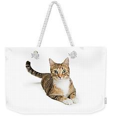 Beautiful Tabby Cat Looking At Camera Weekender Tote Bag