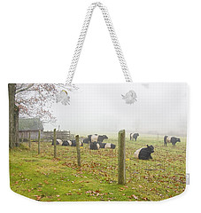 Belted Galloway Cows Farm Rockport Maine Photograph Weekender Tote Bag by Keith Webber Jr