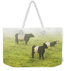Belted Galloway Cows Grazing  In Foggy Farm Field Maine Weekender Tote Bag by Keith Webber Jr