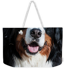 Weekender Tote Bag featuring the photograph Bernese Mountain Dog Portrait  by Gary Whitton