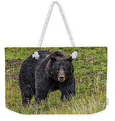 Weekender Tote Bag featuring the photograph Big Black Grizzly Boar by Yeates Photography