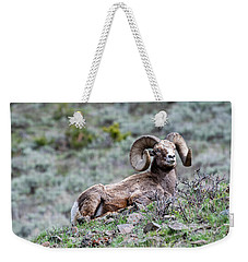 Weekender Tote Bag featuring the photograph Big Horn Sheep #2 by Scott Read