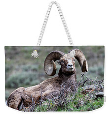Weekender Tote Bag featuring the photograph Big Horn Sheep #3 by Scott Read