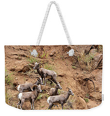 Big Horn Sheep Family Weekender Tote Bag