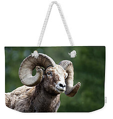 Weekender Tote Bag featuring the photograph Big Horn Sheep by Scott Read