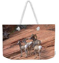 Big Horn Sheep, Zion National Park Weekender Tote Bag