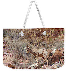Bighorn Ram Of The Mountain Desert Weekender Tote Bag
